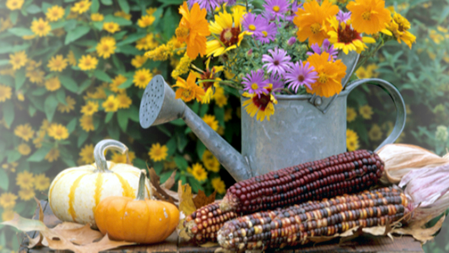 Image of Watering can with flowers inside of it next to pumpkins and ears of corn